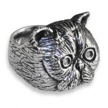 Silver Ring with Exotic shorthair