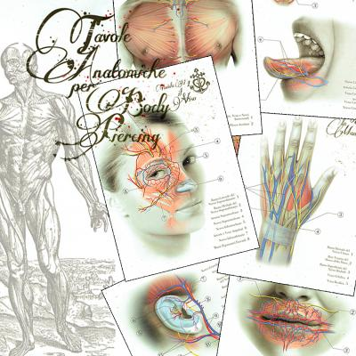 Anatomical boards for Body Piercing
